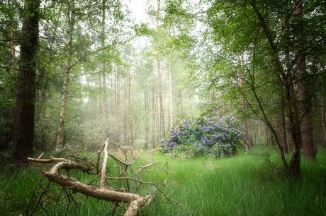 Diep, diep in het bos