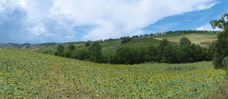 Zonnebloemveld in Toscane