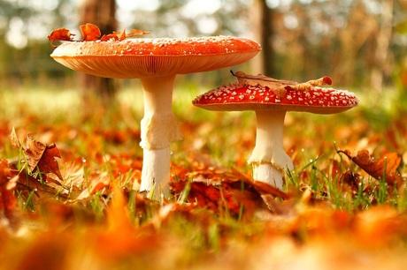 In herfstsfeer