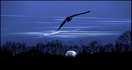 night flight ..
