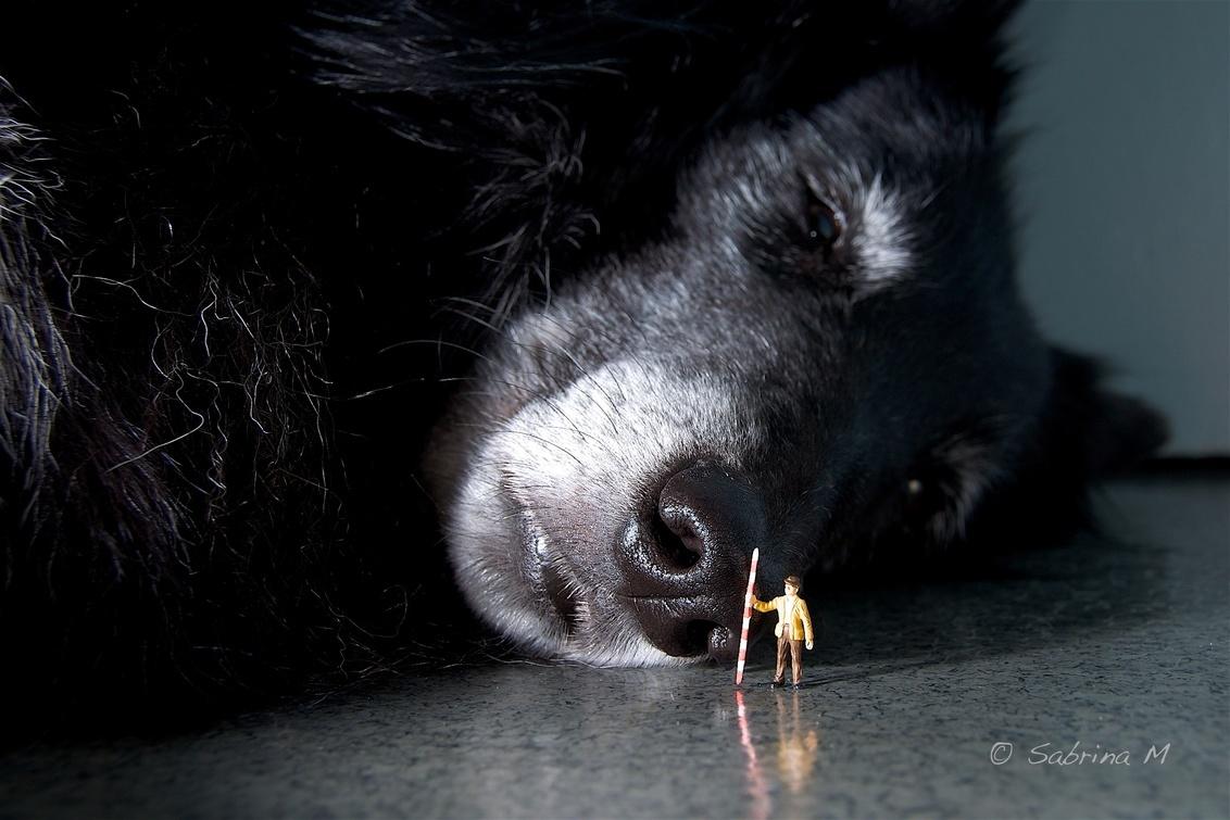 Opmeten - Ze vond het maar niet poseren met zo'n klein mannetje. Deze foto maakte deel uit van een verhaaltje waarbij een moord was gepleegd en de dader Elvira - foto door sabbe op 15-01-2016 - deze foto bevat: miniatuur, mini, figuurtje, Teenyweenies, SabrinaM, peiser