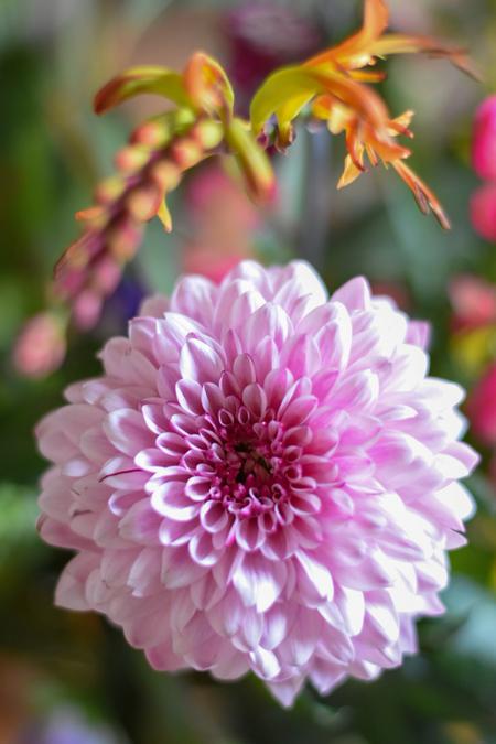 Color Your World - Zin in de lente wanneer ik deze vrolijke kleuren zie! - foto door Siska7211 op 08-03-2021 - deze foto bevat: bloem, dahlia, boeket, kleurrijk
