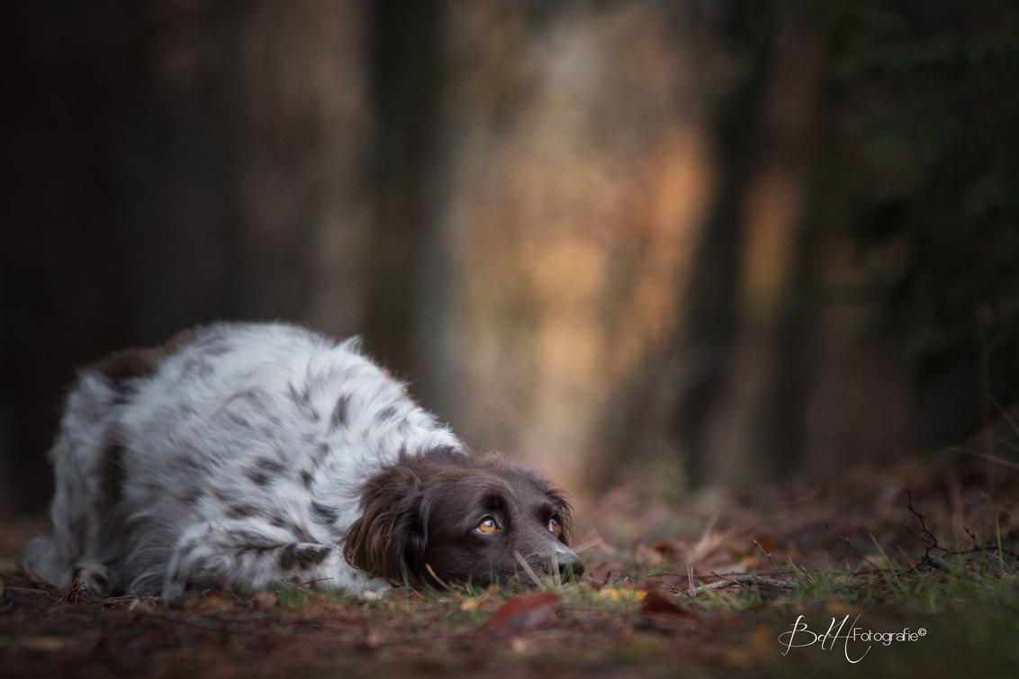 Fijne Dierendag! - - - foto door BiancadH op 04-10-2018 - deze foto bevat: herfst, dieren, huisdier, bos, hond, jachthond, heidewachtel