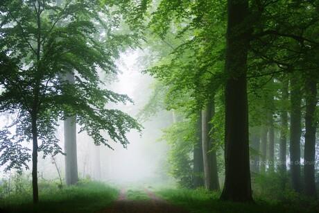 Mist in de lentebos