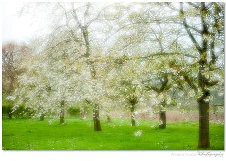 Blossom moods