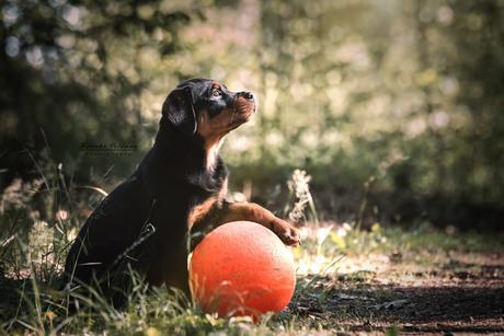 Nora moedigt de oranje voetbalsters aan ;)
