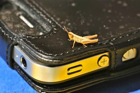 iPhone onmisbaar op vakantie