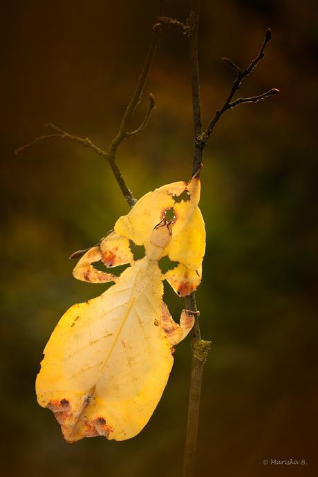 herfstblaadje