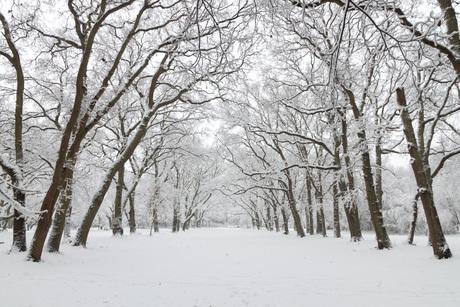 Eerste Sneeuw 1