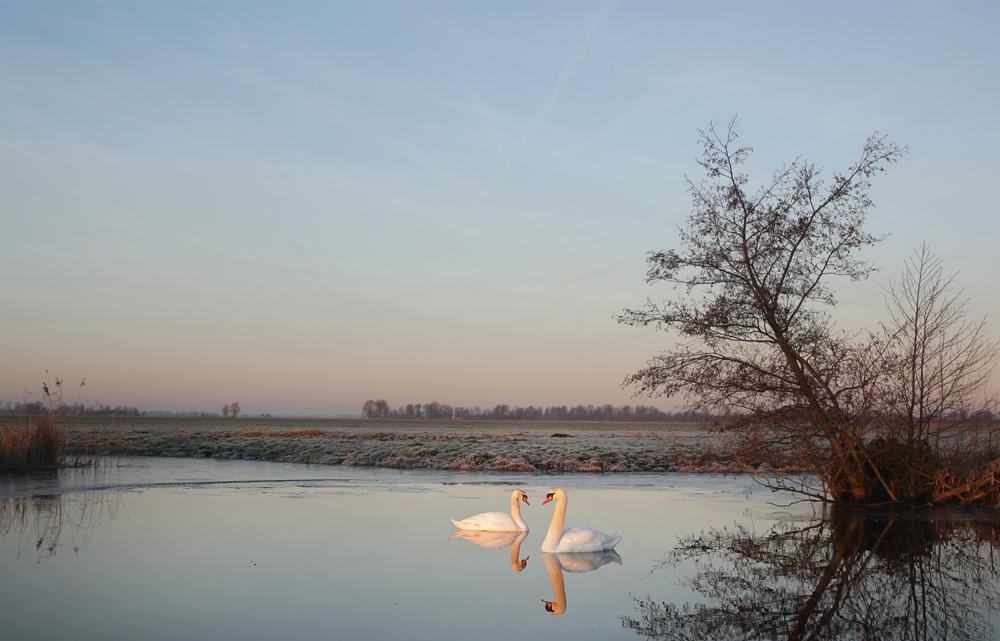 Polder winterochtend - een winterochtend tussen de Hollandse weilanden.  groeten, Bert - foto door b.neeleman op 22-01-2015