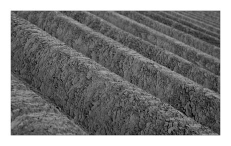 Aardappelveld (2)