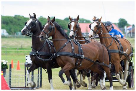 4span paarden in actie