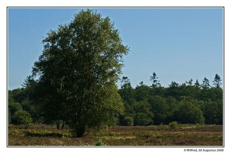 De Heide in Ermelo