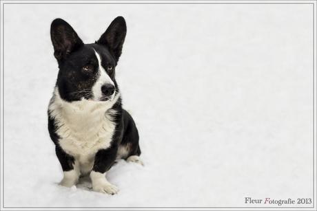 Sneeuw portret 2