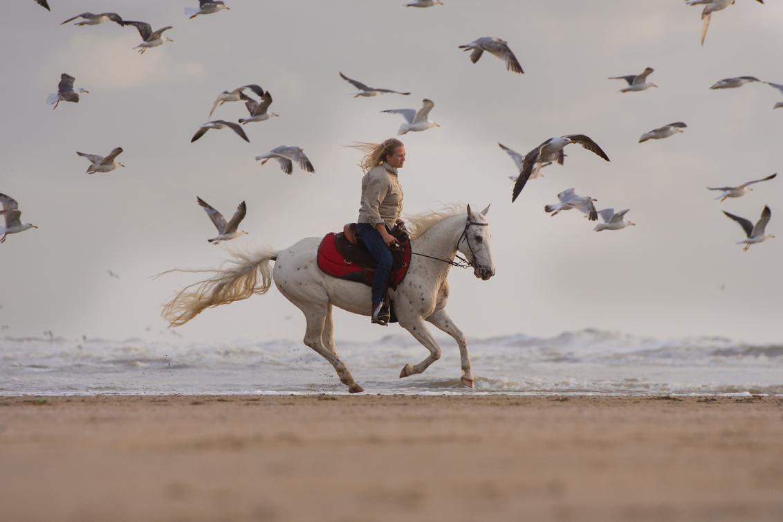 Actie... - - - foto door Hester-Goeman op 24-06-2018 - deze foto bevat: strand, vogels, paard, zonsondergang, dieren, meeuwen, actie