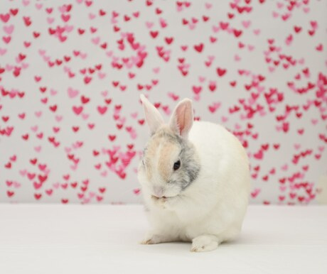 Het liefste konijn Pluis