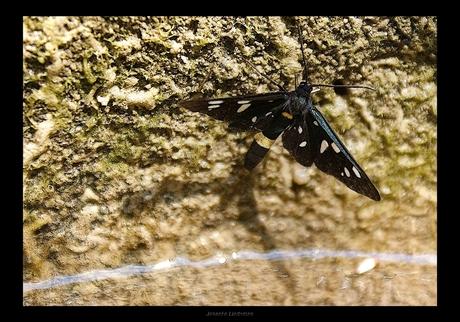 Vlinder schaduw en reflectie...