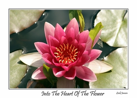 Into the Heart of The Flower