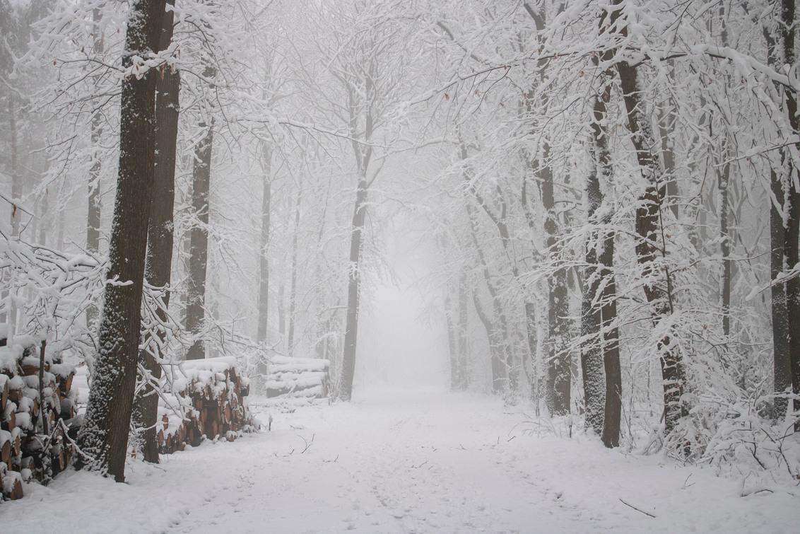 Magische Winter - Gisterochtend was er opnieuw sneeuw gevallen in het Vijlenerbos, dus ik ben er al heel vroeg heen gegaan en wat was het er magisch. - foto door Carla34 op 26-01-2021 - deze foto bevat: boom, natuur, sneeuw, winter, landschap, mist, bos, nederland, vijlen, vijlenerbos, zuid-limburg, vroege ochtend