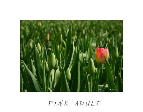 Pink Adult