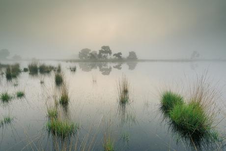 Strabrechtse Heide 327
