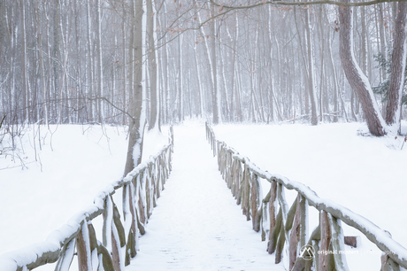 Frosty Forest...