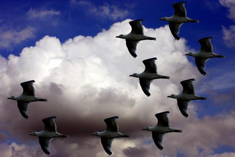 9 meeuwen in vogelvlucht