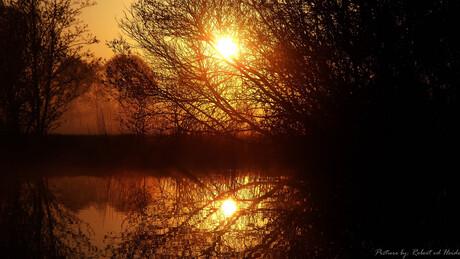 Sunrise between tree