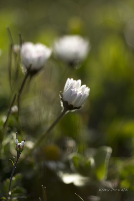White, tender and wild....