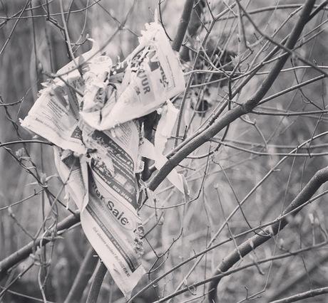 Krant tussen de takjes van de bosjes