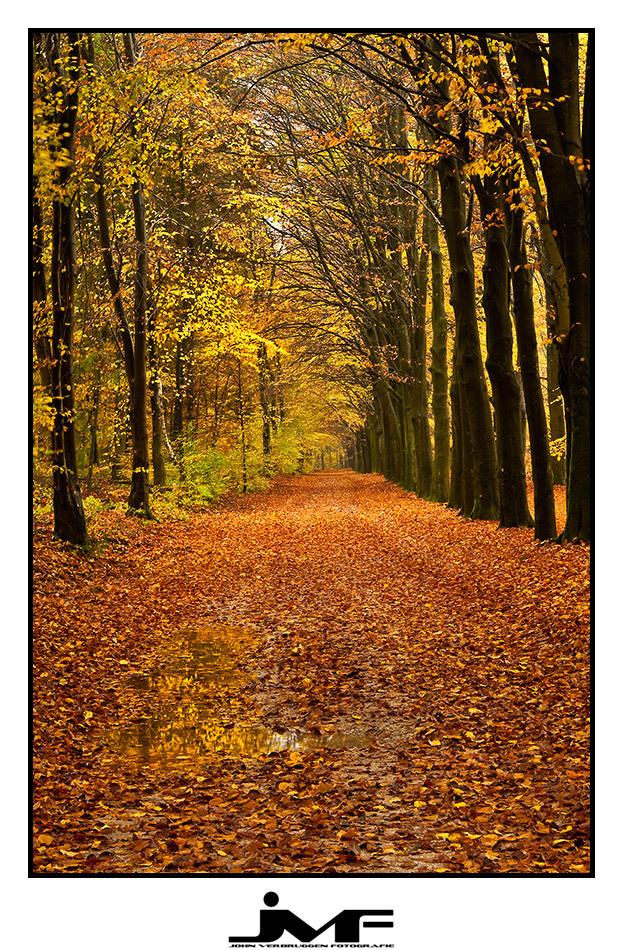 Season of colors (6) - Locatie: Nationaal Park De Veluwezoom.  Goed kijken ;-) - foto door info-328 op 10-11-2009