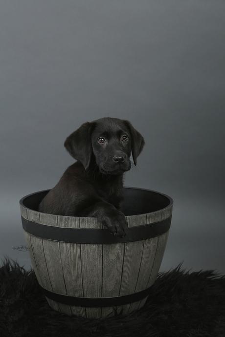 Little Dog *