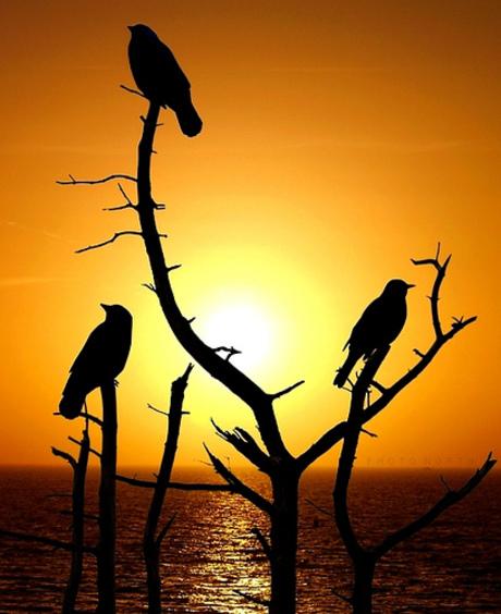 Brids Sunset