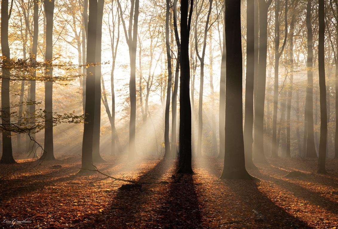 Mist - - - foto door LGphotography op 25-11-2020 - deze foto bevat: boom, natuur, licht, herfst, landschap, mist, bos, nederland, speulderbos
