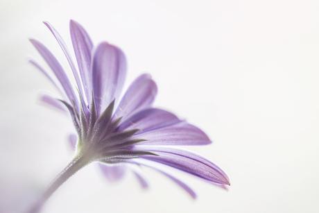 paars bloemetje II.