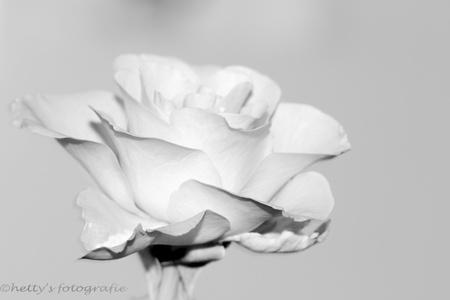 Overwegen - Overwegen....over wikken en wegen...  En wat zul je zien  op die momenten van introspectie. Wie kom je er tegen en wie is er weggegaan....  Wa - foto door hettysfotografie op 26-08-2014 - deze foto bevat: macro, bloem, roos, zwart