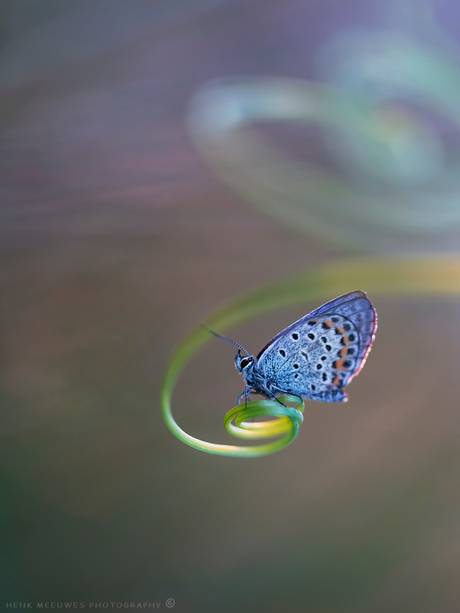Spinning bleu