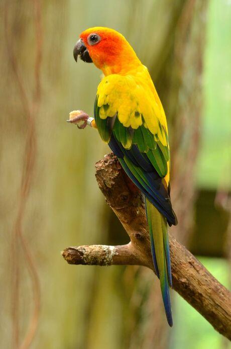 DSC_2995 - Papegaaien soort - Bewerkt. JPG