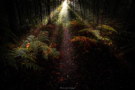 Tropische bossen in het Leudal