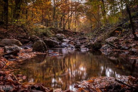 Herfst - The Pond
