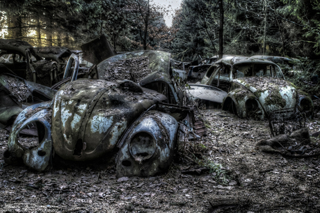 Old beetles in the woods