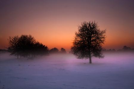 Winterland Venlo - De Venlose heide,gehuld in mist,een zacht zonnetje neemt die dag afscheid van de witte deken over het landschap.  Geupdate versie! - foto door Scavo_zoom op 31-12-2010 - deze foto bevat: sneeuw, winter, landschap, canon, limburg, nederland, sigma, venlo, 40d, scavo, venlose heide