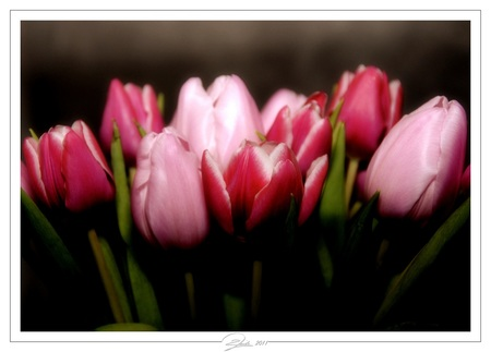 Een vleugje voorjaar - Om alvast weer in de stemming te komen voor de naderende lente - foto door spitsoor op 23-01-2011 - deze foto bevat: roze, tulpen, boeket