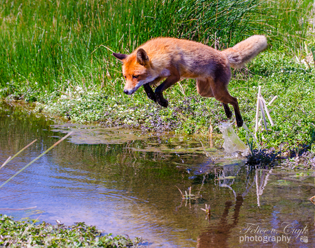 The quick brown fox jumps over...