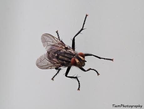 Een vlieg op het raam