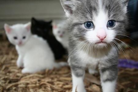 Small Little Creature - :-) - foto door ennairam_zoom op 10-05-2010 - deze foto bevat: wit, kitten, klein, poes, zwart, kat, jong, nieuw, geboren