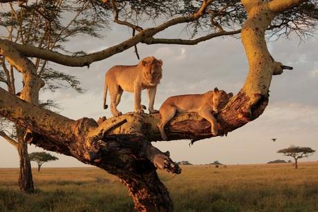Ochtend op de Serengeti