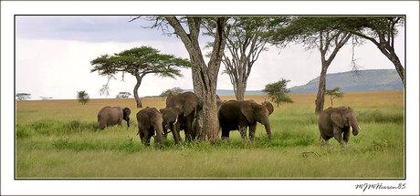 Familie olifant 2