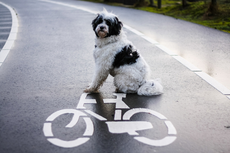 Kenyi leert fietsen - - - foto door suusvergooszen op 17-01-2016 - deze foto bevat: huisdier, hond