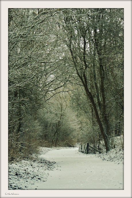 The beauty of winter...